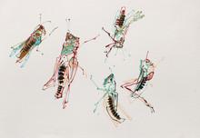 Meadow grasshoppers, Sharpham