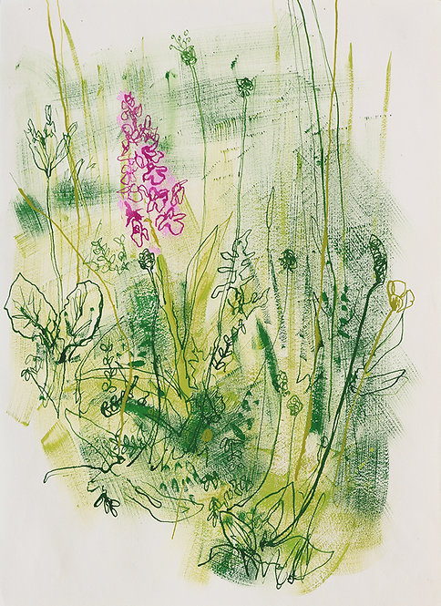 Chalk grassland, Common spotted orchid