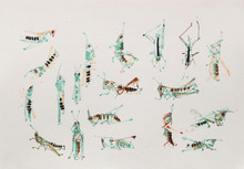 Meadow grasshopper and long-winged conehead studies, Sharpham