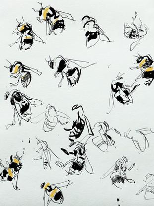 Bees 3 croped.jpg