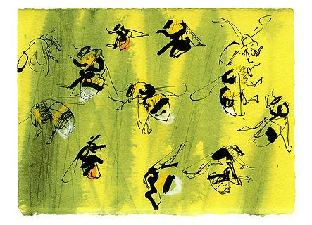 128x179_NP-Bombus lucorum & Bombus lapid