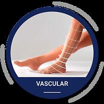 vascular-02.png