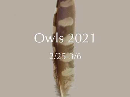 Owls 2021