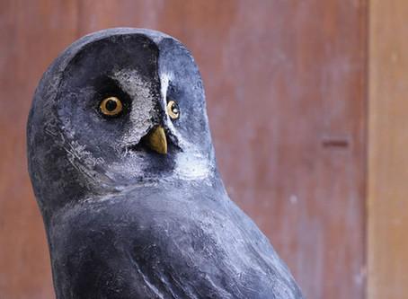 Owls展