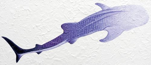 沼田月光「ジンベイザメ」32×73cm