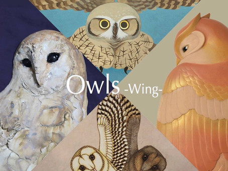 Owls wing