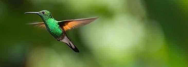 hummingbird-2139278_1920_edited.jpg