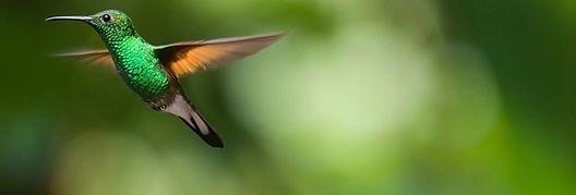 hummingbird-2139278_1920_edited_edited_e