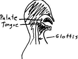 The pedagogy of vocal articulations