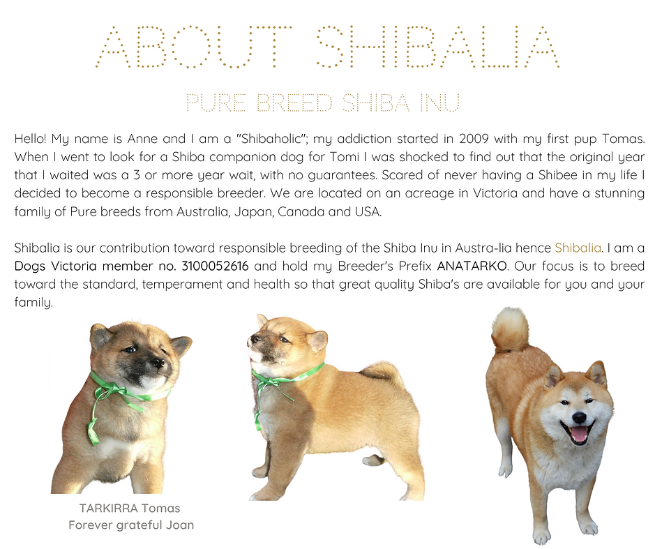ABOUT SHIBALIA.png