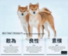SHIBA CAT - Copy.png
