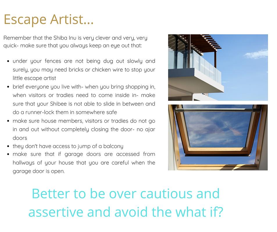 ESCAPE ARTIST.png