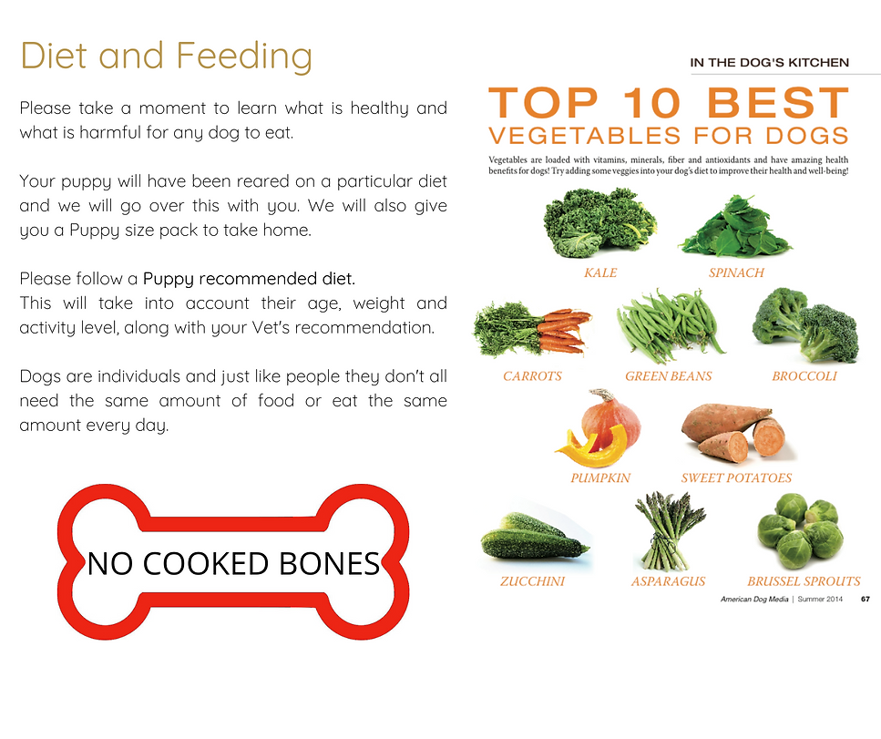 DIET AND FEEDING (1).png
