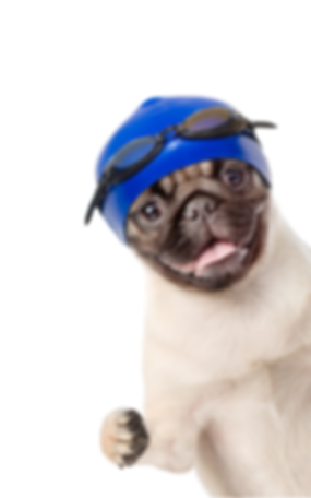 Puggle 555.png