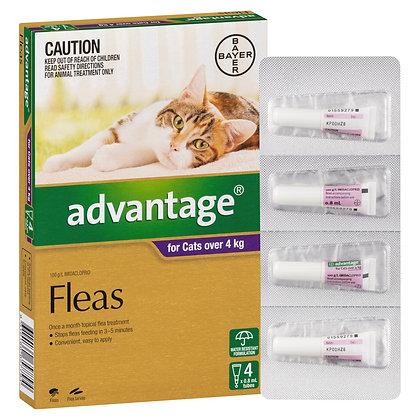 ADVANTAGE CAT 4KG+ PURPLE  4PACK