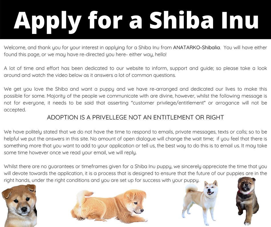 APPLY FOR A SHIBA .png