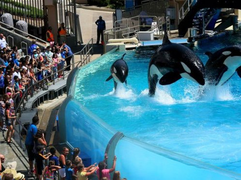 TripAdvisor ends ticket sales to attractions with captive whales and dolphins