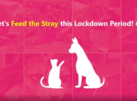 Don't forget our strays