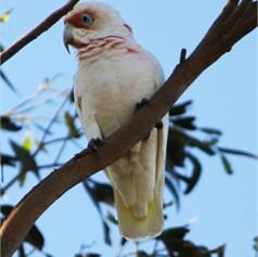 bird xcv.jpg