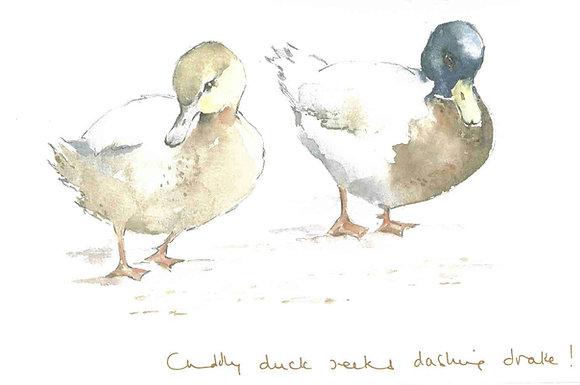 Cuddly duck seeks dashing drake! Print