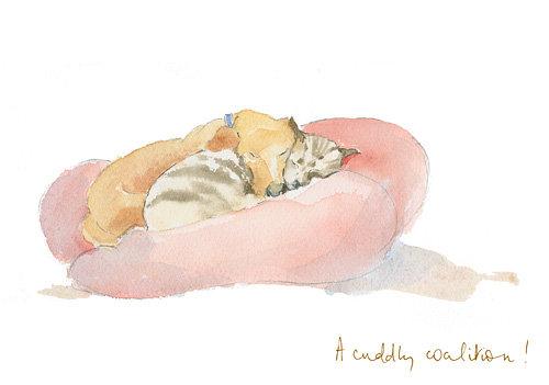 dog and cat cuddling together