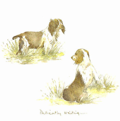 Two cocker spaniels in the grass