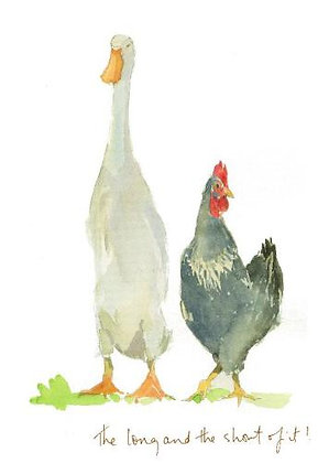 a duck and a hen walking together