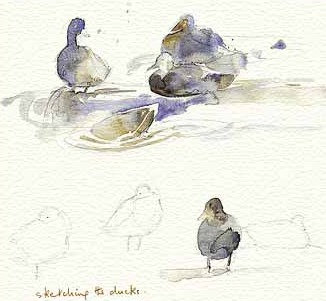 Sketching Ducks A4 Print