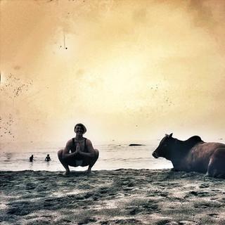 goan cow, hindi squat