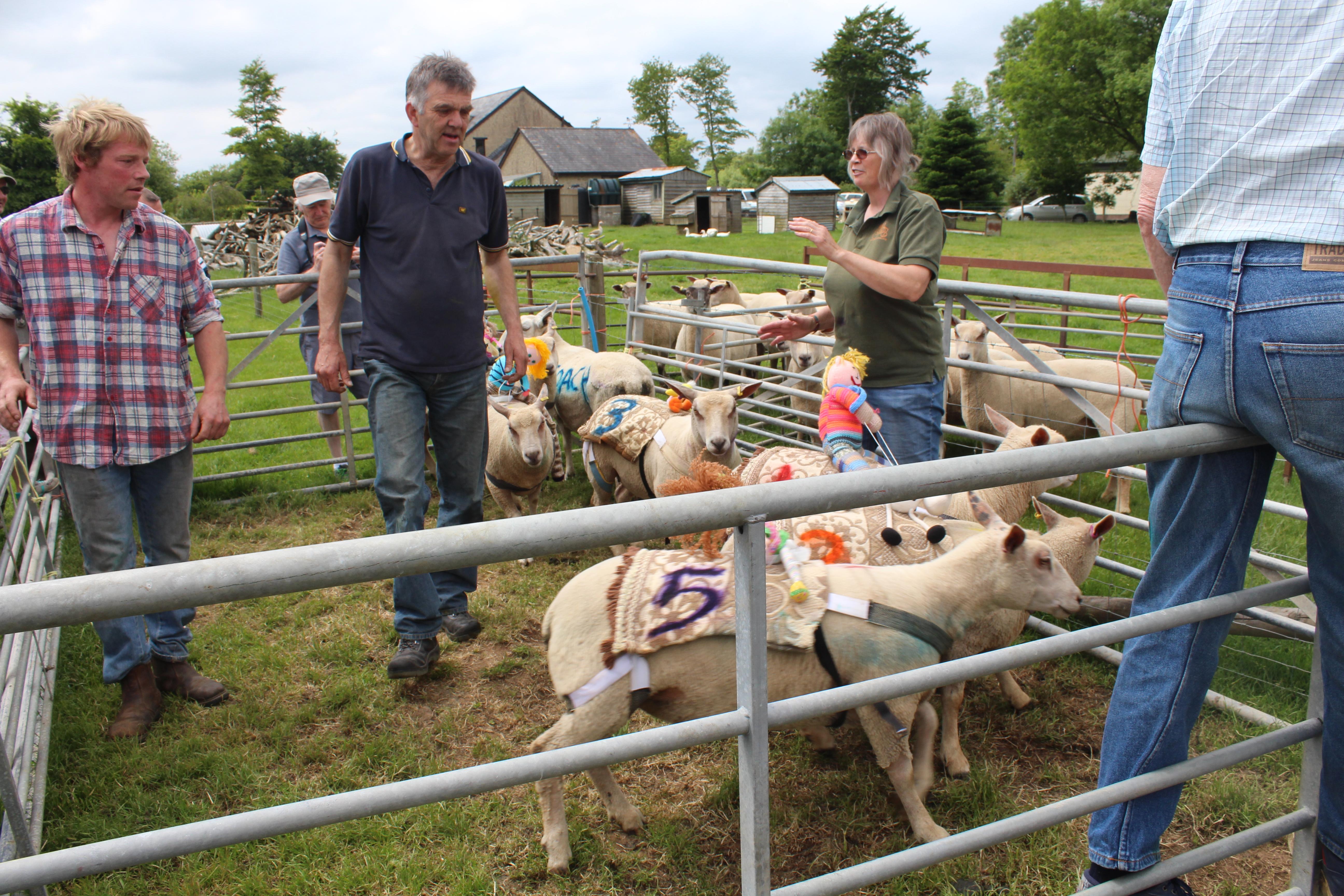 Sheep & Pig Racing (2)