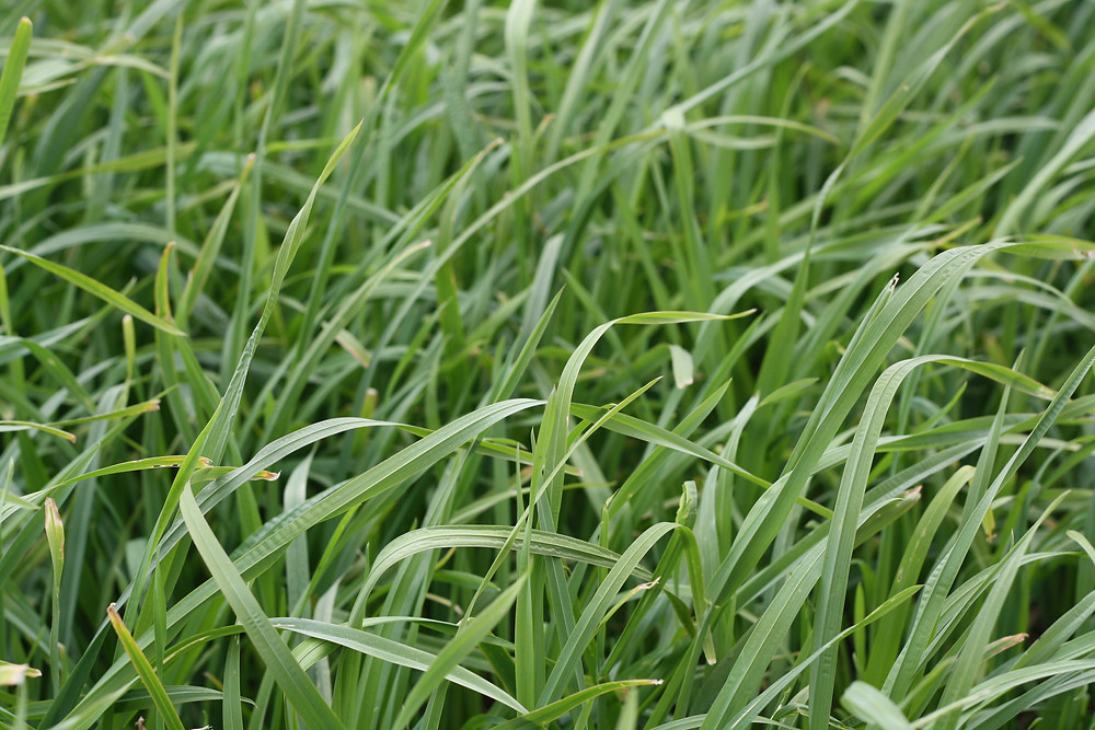 pasture and forage