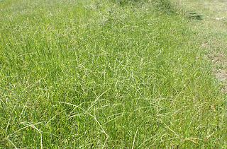 BOSCHHOEK 19.05.2011 JM1.JPG