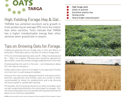 Tips on growing oats for forage
