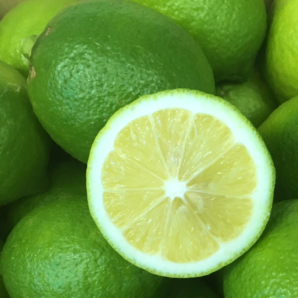 訳あり ノーワックス 防腐剤不使用 / 国産 広島県産 レモン
