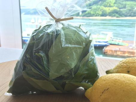 ネロリの島の香りをお届け~自宅でプチグレインアロマオイルとフローラルウォーターを抽出しよう☆