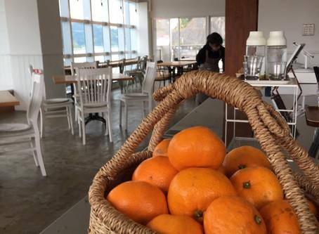 ネロリの島カフェでみかんプレゼント中