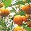 Thumbnail: 橙アロマオイル 5ml