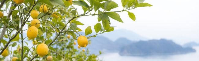 Bio aroma(ビオアロマ) 化学農薬不使用エッセンシャルオイル・アロマオイル