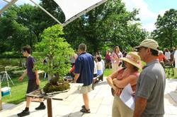 Admiring the bonsai on the patio