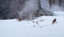 Chat et renard