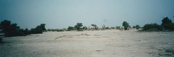 タクラマカン砂漠.jpg