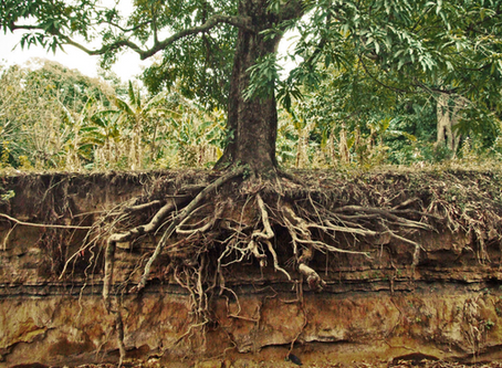 The One About Taking Care of Our Roots