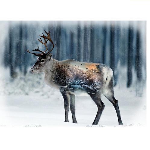 HF December Caribou Panel