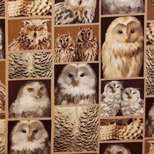 KA Owl Portraits