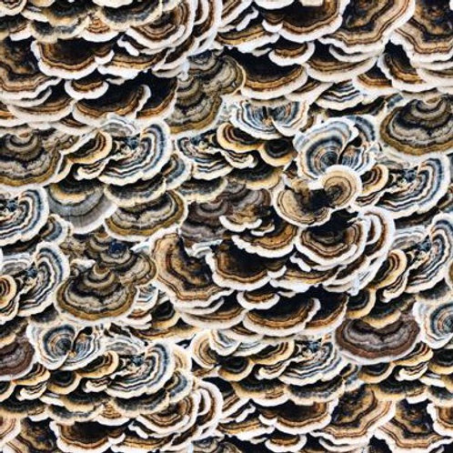 HF Mushrooms (Ganoderma)