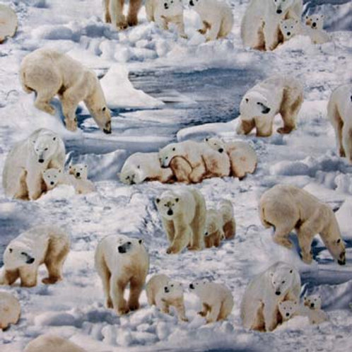 ES Polar Bear Family