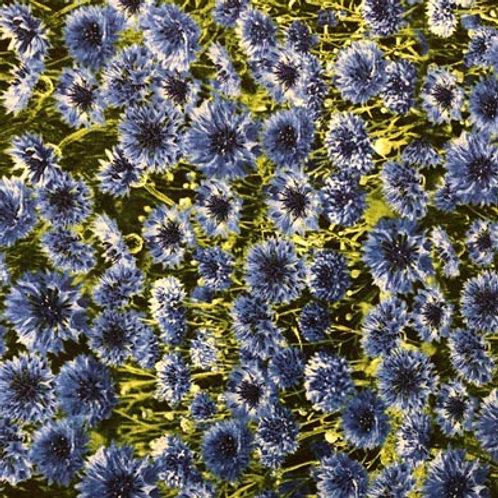 TT Cornflowers