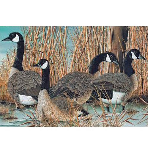 NC Canada Goose Panel