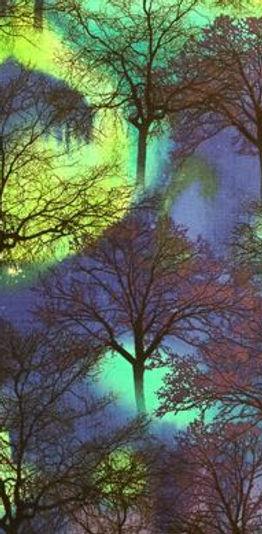 TT Northern Lights Trees