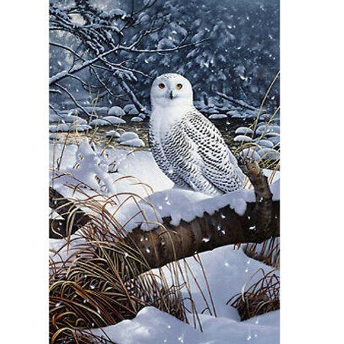 NC Snowy Owl Panel